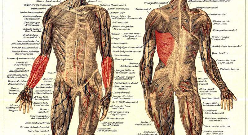 Primäre Muskeln beim Klettern
