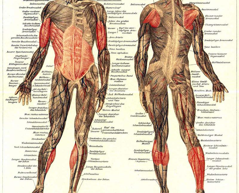 Synergetisch Stabilisierende Muskeln beim Klettern